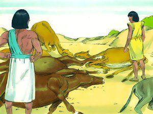 Plague of diseased livestock